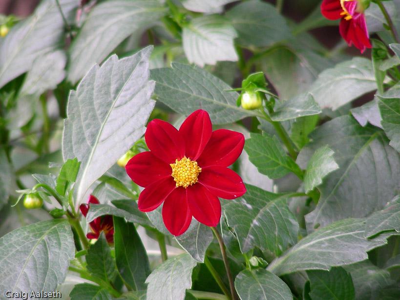 Stadtpark Fall Flower